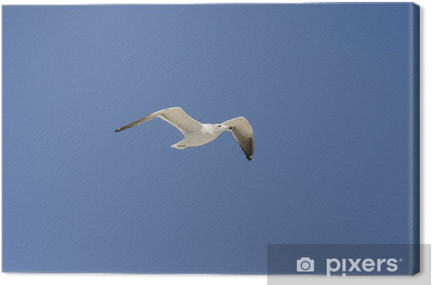 Seagull flying Canvas Print - Other objects