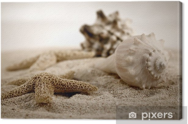 seashells on the sand Canvas Print - iStaging