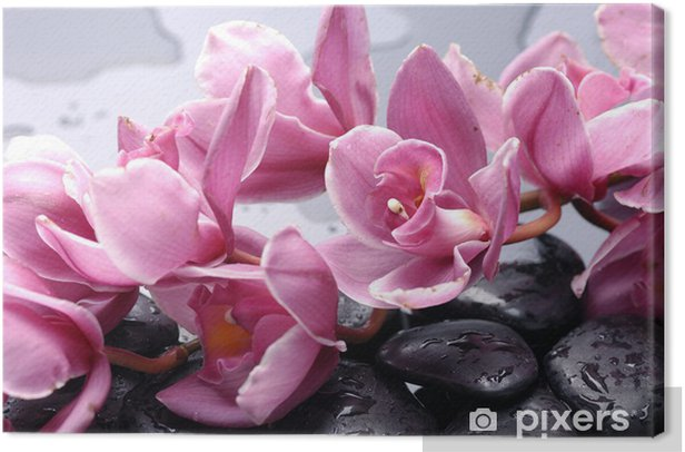 Set of cattleya orchid flower and stone with water drops Canvas Print - Themes
