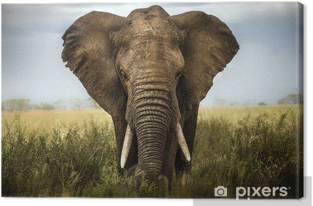 sfondo di elefante Canvas Print - Elephants