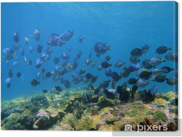 Shoal of Blue Tang fish and Ocean Surgeonfish Canvas Print - Aquatic and Marine Life