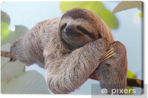 Sloth Canvas Print - Mammals