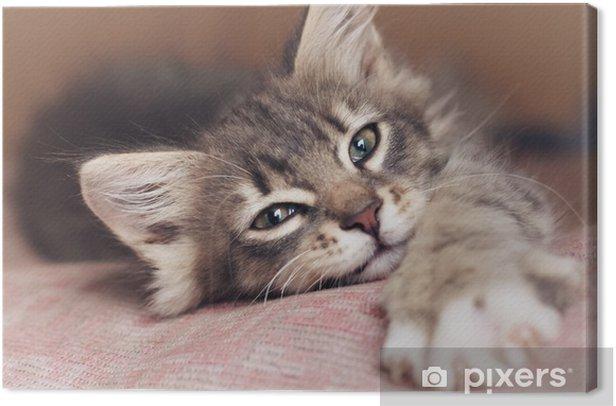 Small kitten Canvas Print - Themes