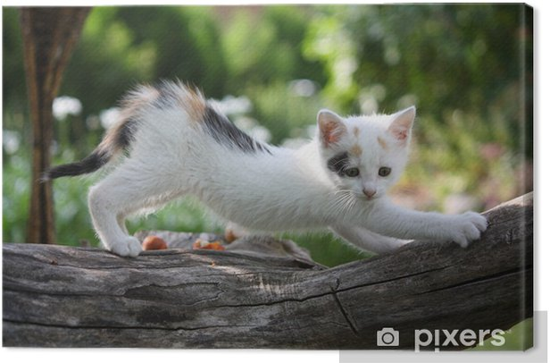 Small white kitten scratching tree branch Canvas Print - Themes