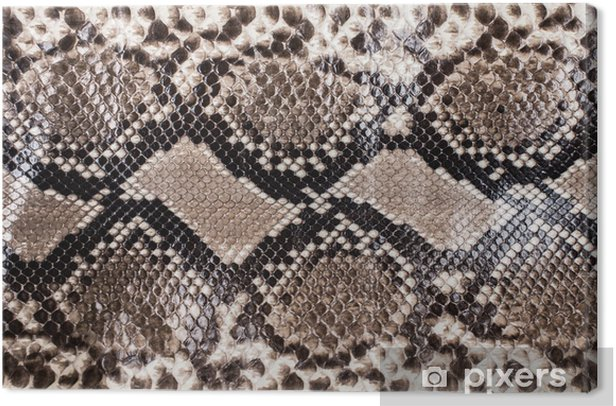 Snake skin pattern background Canvas Print - Graphic Resources