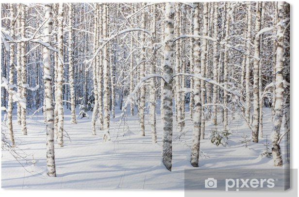 Snowy birch trunks Canvas Print - Styles