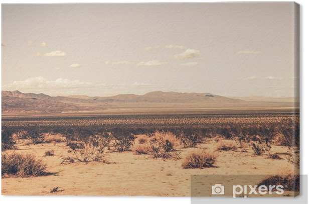 Southern California Desert Canvas Print - Desert