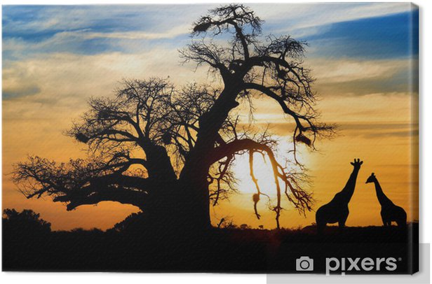 Spectacular African sunset with Baobab and Giraffe Canvas Print - Themes