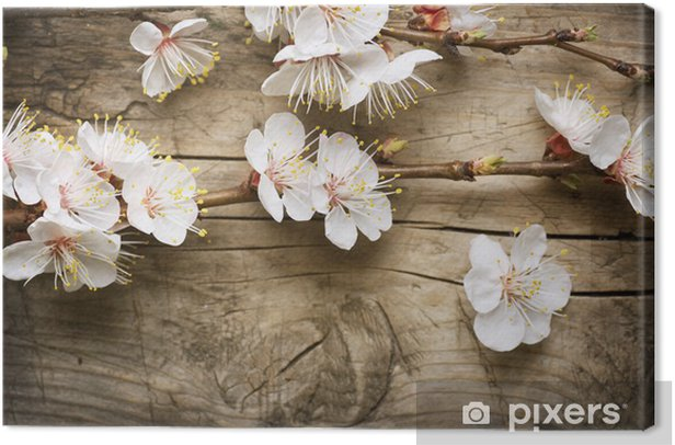 Spring Blossom over wooden background Canvas Print - Themes