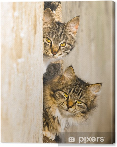 spring cats Canvas Print - Mammals