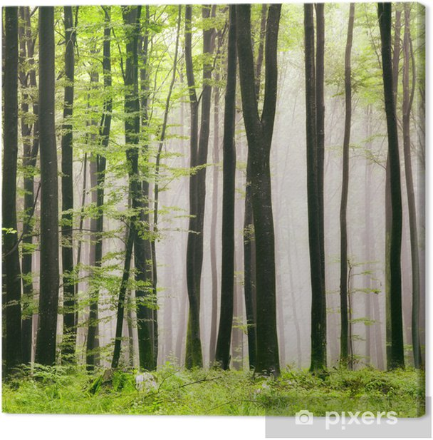 Spring forest Canvas Print - iStaging