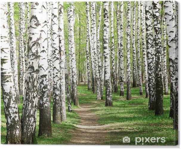 Spring in birch grove Canvas Print - Destinations