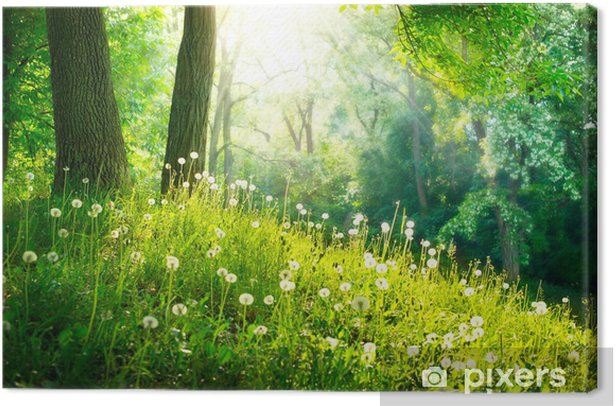 Spring Nature. Beautiful Landscape. Green Grass and Trees Canvas Print - Destinations