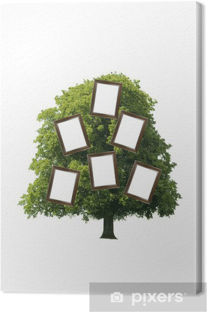 Stammbaum Canvas Print - Trees
