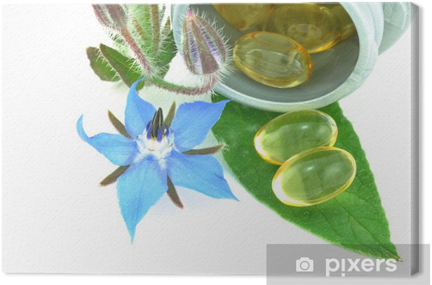 Starflower or Borage Oil Canvas Print - Agriculture