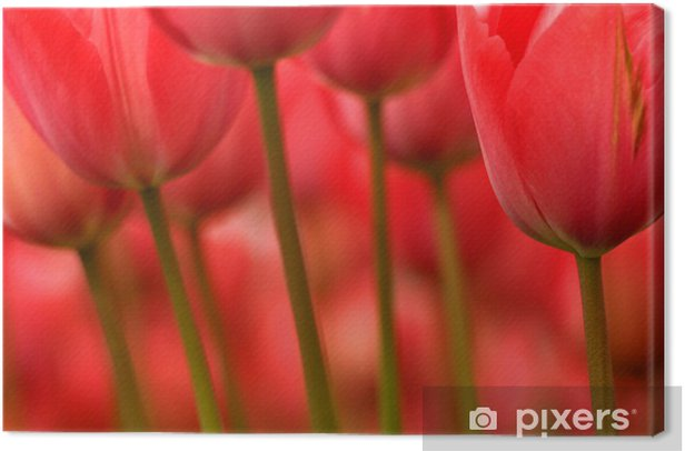 stems and flowers Canvas Print - Themes