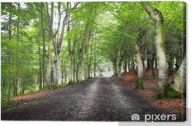 strada nel bosco Canvas Print - Forests