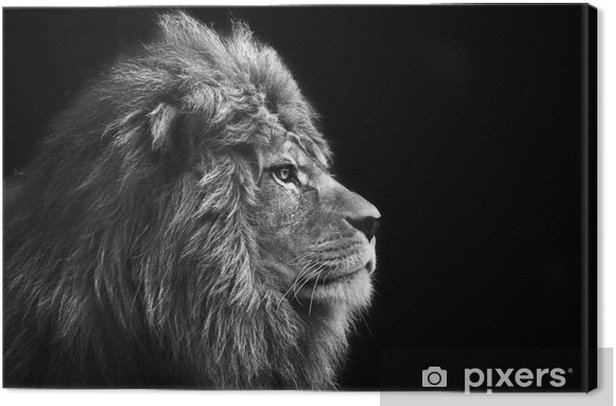 Stunning facial portrait of male lion on black background in bla Canvas Print - Styles