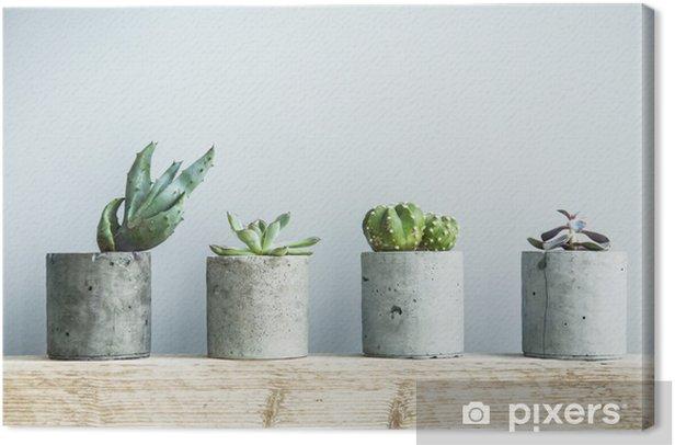 Succulents in diy concrete pot. Scandinavian room interior decor Canvas Print - Home and Garden