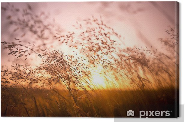 Summer dry grass Canvas Print - Themes