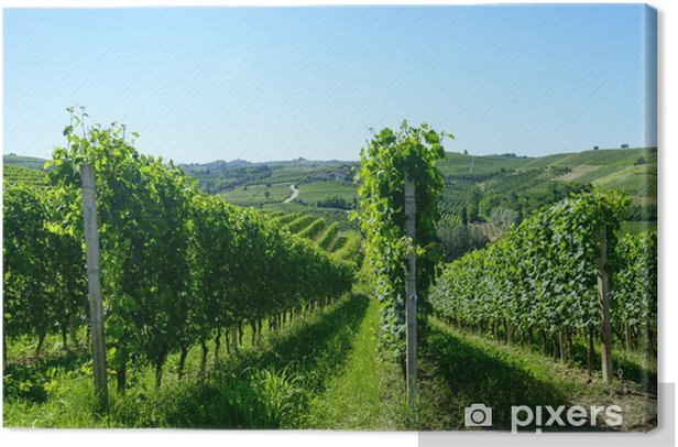 Summer landscape in Langhe (Italy) Canvas Print - Agriculture