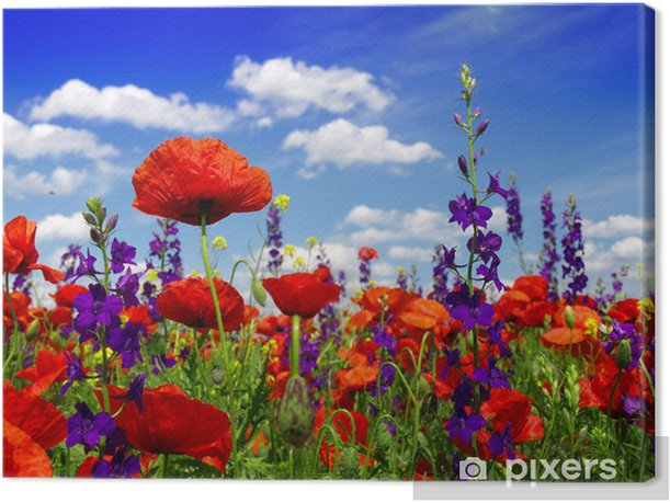 Summer wildflowers and clouds Canvas Print - Poppies