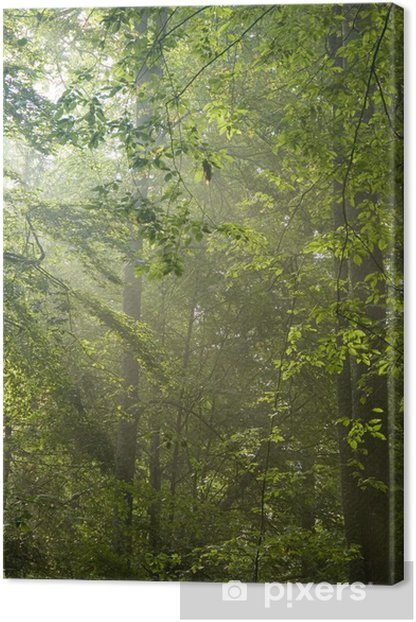 Sun rays shine through branches and green leaves Canvas Print - Abstract