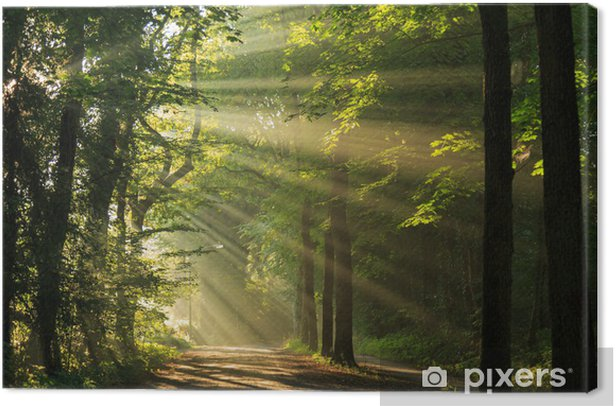Sun rays shining through the forest Canvas Print - Themes