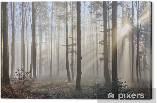 Sun rays through the foggy forest Canvas Print - Themes