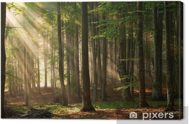 Sunbeams coming through the forest Canvas Print - Themes