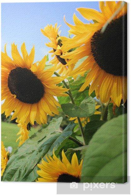 sunflowers Canvas Print - Themes