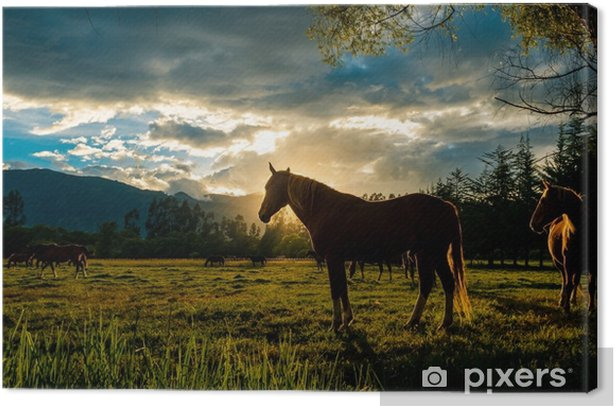 Sunset horse Canvas Print - Landscapes