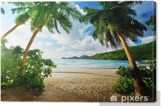 Sunset in the Seychelles Canvas Print - Palm trees