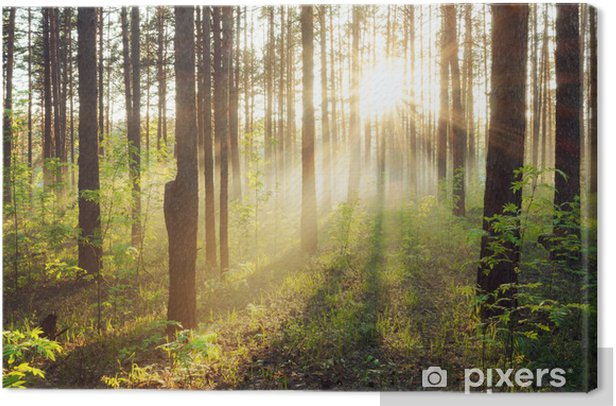 sunset in the woods Canvas Print - Themes