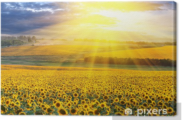 Sunset over the field Canvas Print - Destinations