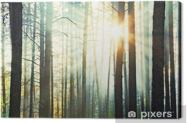 sunset Canvas Print - Forests