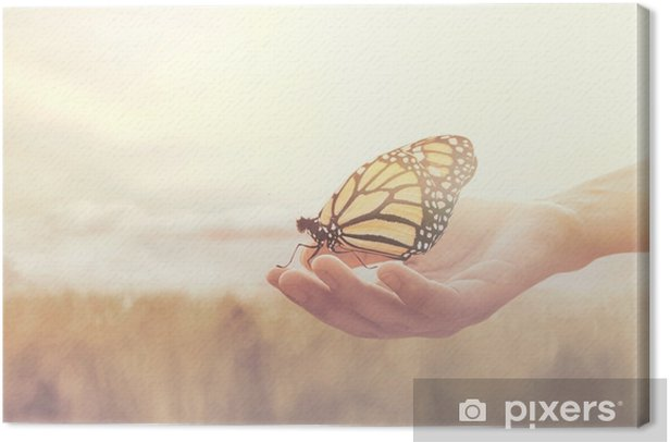 sweet encounter between a human hand and a butterfly Canvas Print - States of Mind