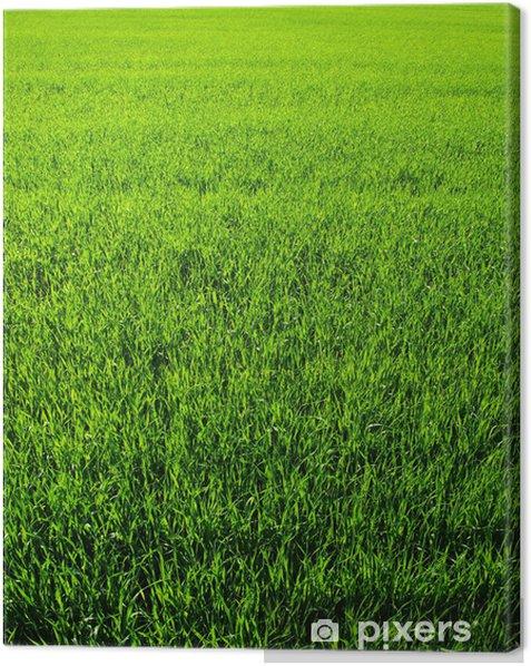Texture green lawn Canvas Print - Plants