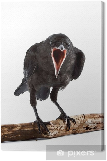 The bird Canvas Print - Birds