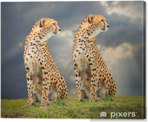 The Cheetah (Acinonyx jubatus) in african savanna. Canvas Print - Mammals
