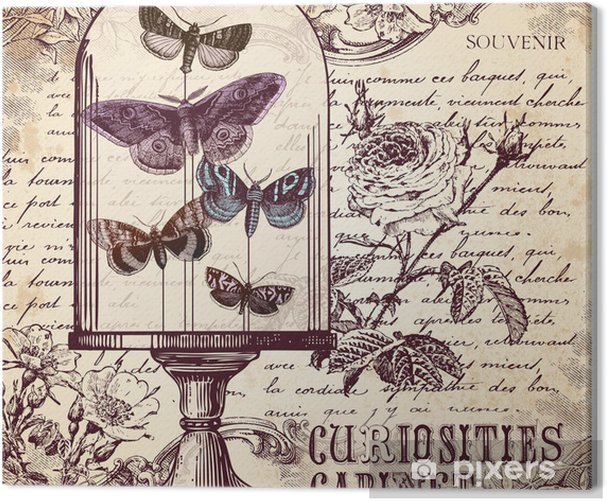 The Curiosities Cabinet Canvas Print - Styles