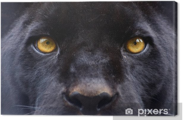 the eyes of a black panther Canvas Print -
