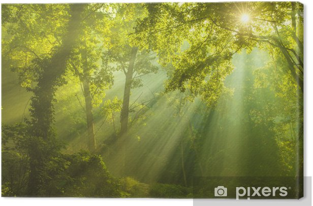 The Forest of Heaven Canvas Print - iStaging
