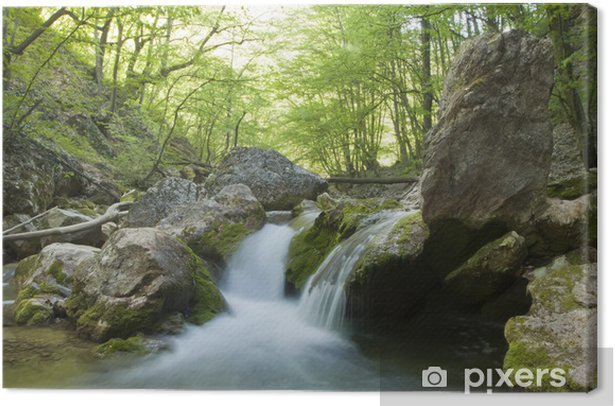The mountain river in the spring in the wood Canvas Print - Themes