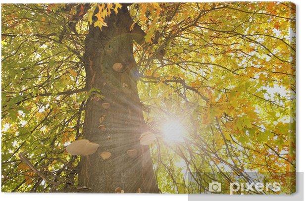 The tree in the sun Canvas Print - Seasons