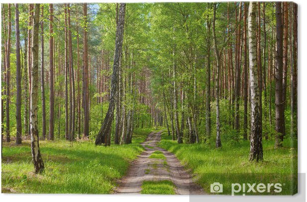 The way by the forest. Beautiful wallpaper. Canvas Print - Themes