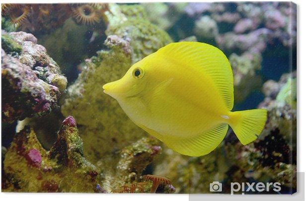 The Yellow Tang Canvas Print - Aquatic and Marine Life