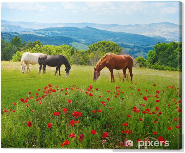 There horses grazing grass Canvas Print - Themes