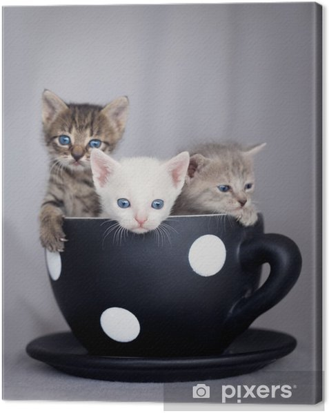Three kittens sitting in large cup Canvas Print - Themes