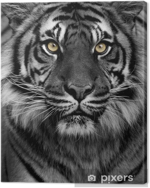 Tiger eyes Canvas Print - Styles